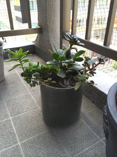 沢山の植物たち