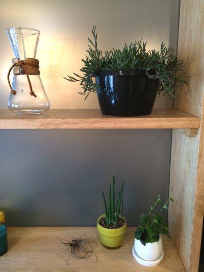 植物を置く木の棚
