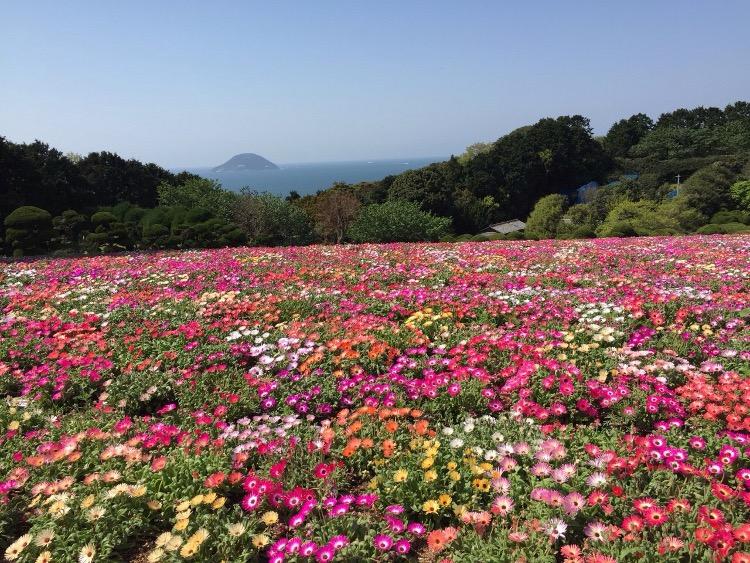 能古島一面の花畑