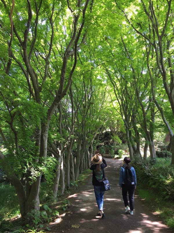 能古島の森林