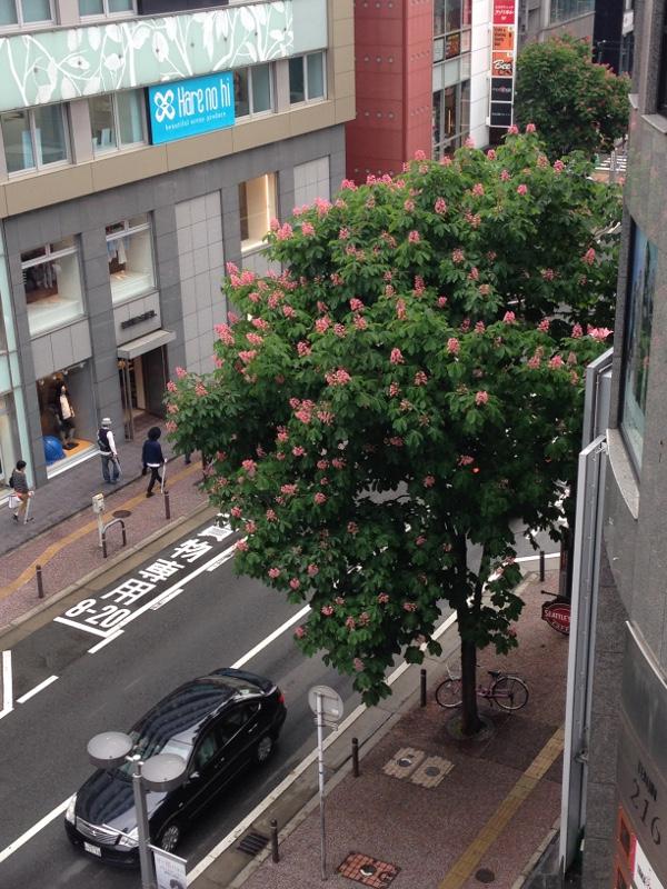 西通りの木々が青々茂ってる