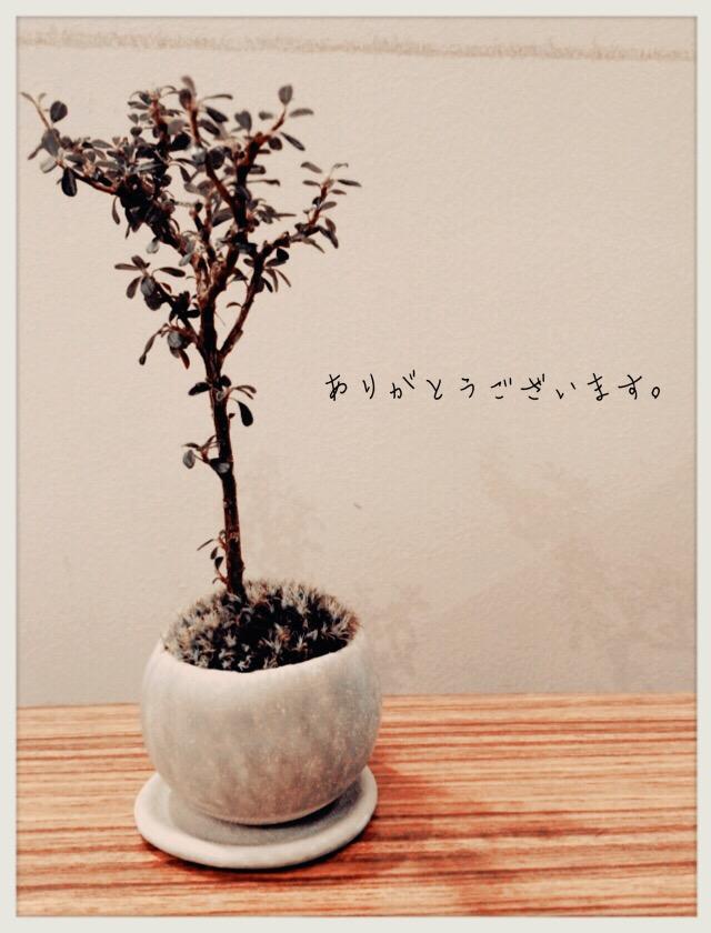 小さめの可愛い盆栽
