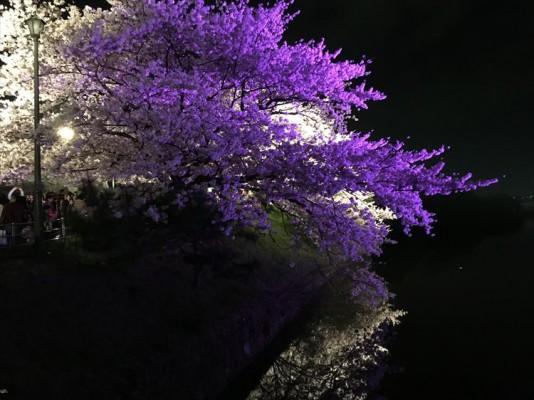 写真 2016-04-02 21 47 36